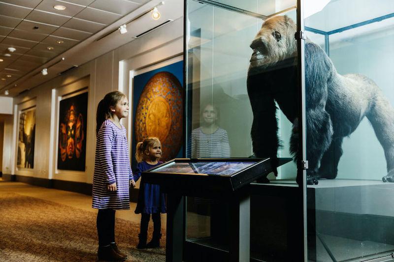 Crianças no Field Museum em Chicago
