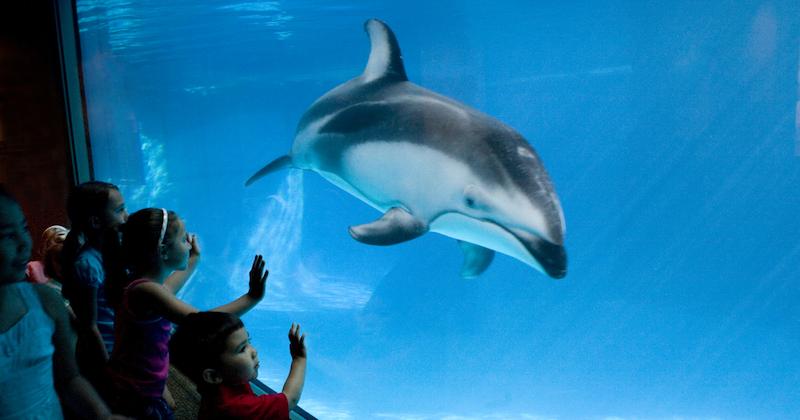 Crianças no Shedd Aquarium em Chicago