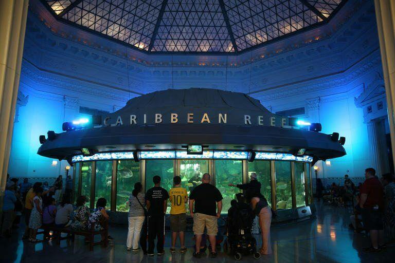 Shedd Aquarium em Chicago: área Caribbean Reef
