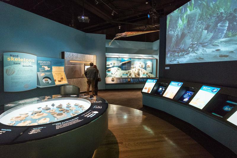Field Museum em Chicago: exposição na ala Evolving Planet