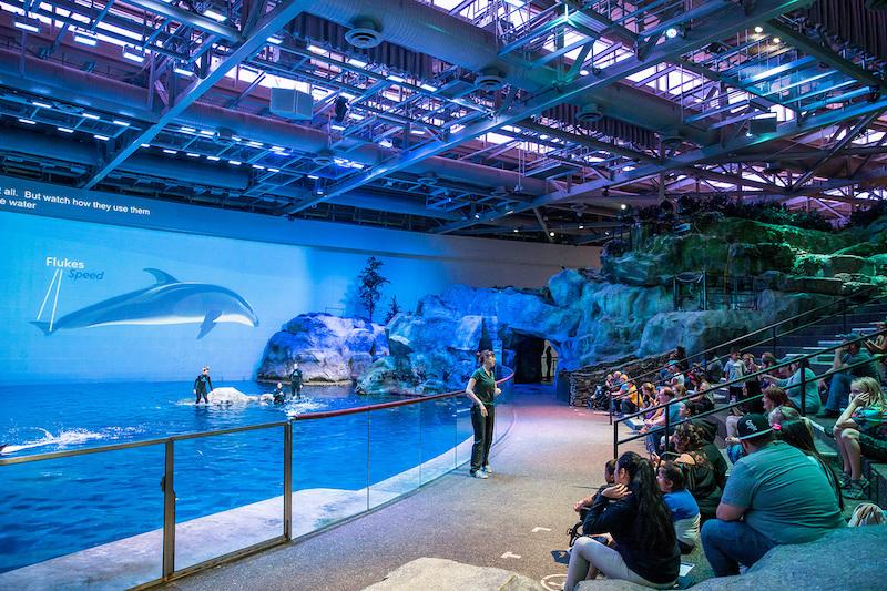 Shedd Aquarium em Chicago: show
