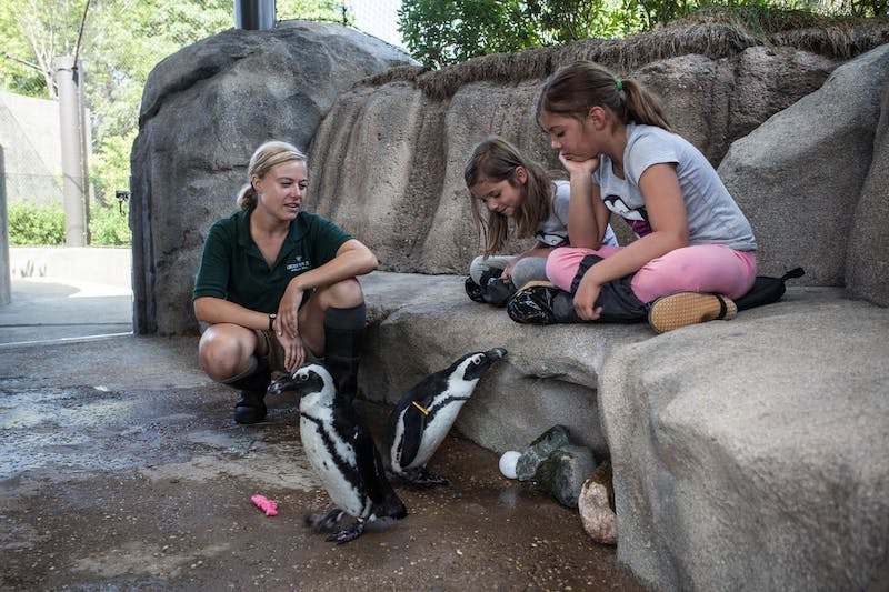 Crianças no Lincoln Park Zoo em Chicago