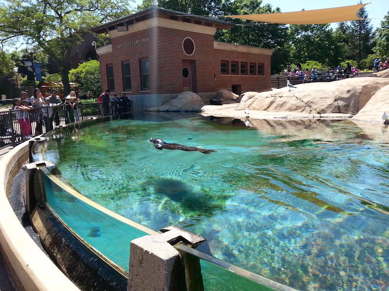 Lincoln Park Zoo em Chicago: exposição de animais