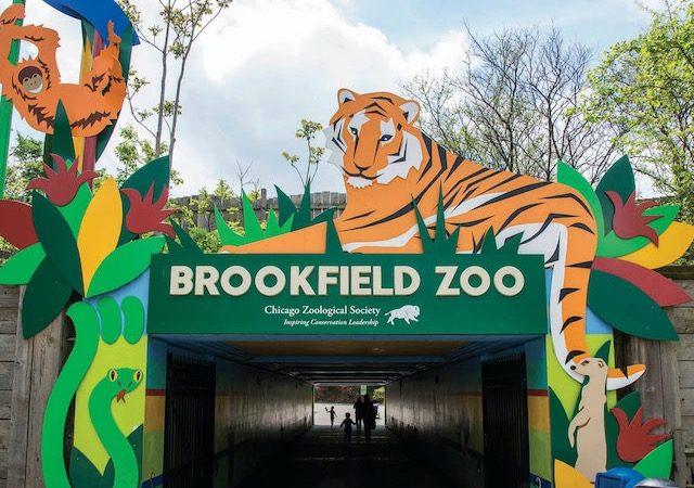 Zoológico Brookfield perto de Chicago